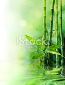 stock-photo-30931138-growth-and-vitality-concept-vigorous-nature