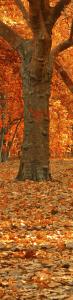 Autumn Strip